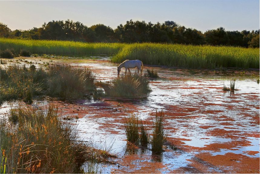 An excursion into the heart of the Camargue in a 4x4 (with a guide)