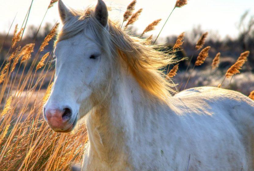 Balade à cheval au bord des étangs