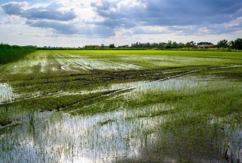 La Maison du riz